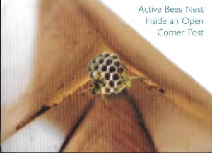 Bees-AAC